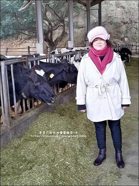2013-1221-苗栗-泉井牧場-Yuki慶6歲生日 (28).jpg