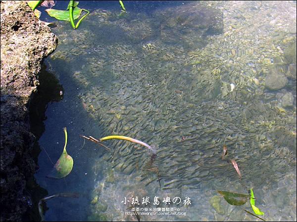2014-0526-屏東-小琉球-花瓶岩 (12).jpg