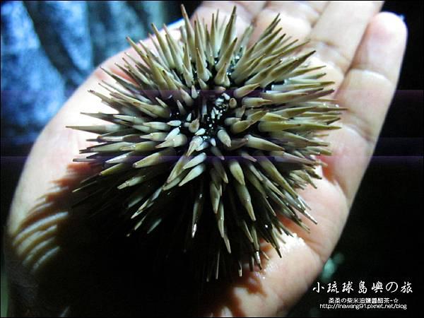 2014-0525-屏東-小琉球-夜間潮間帶 (12).jpg