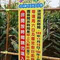 2014-1228-嘉義-義竹-玉米迷宮 (4).jpg