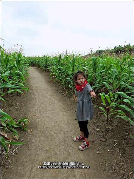 2014-1228-嘉義-義竹-玉米迷宮 (8).jpg