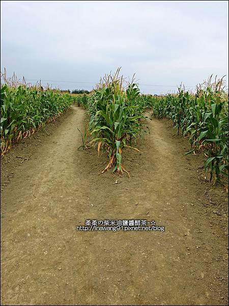2014-1228-嘉義-義竹-玉米迷宮 (10).jpg