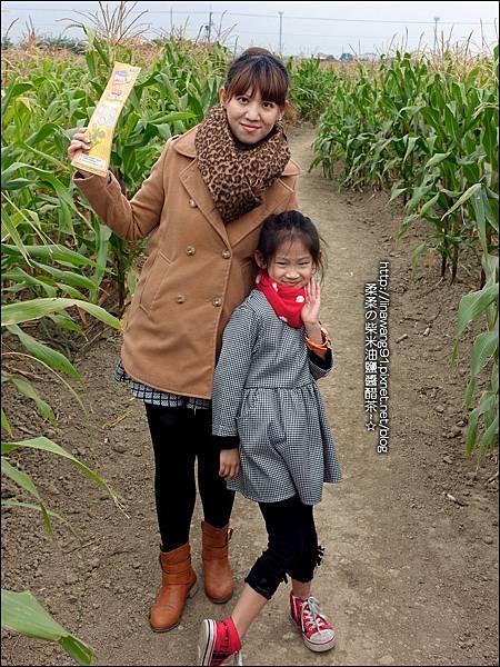 2014-1228-嘉義-義竹-玉米迷宮 (11).jpg