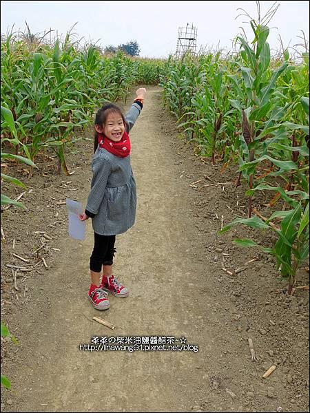 2014-1228-嘉義-義竹-玉米迷宮 (15).jpg
