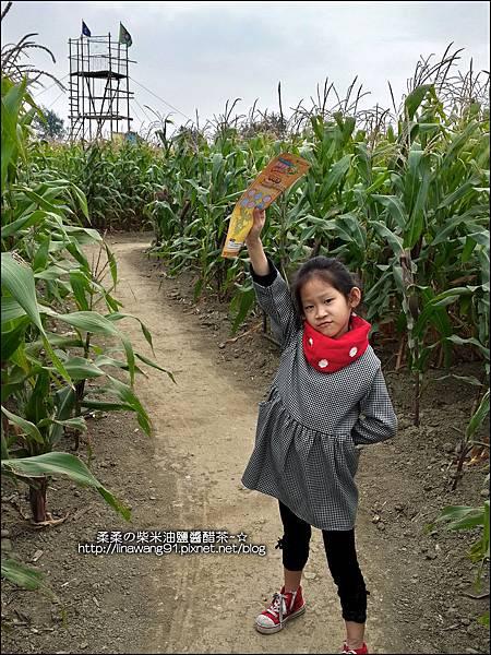 2014-1228-嘉義-義竹-玉米迷宮 (19).jpg