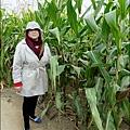 2014-1228-嘉義-義竹-玉米迷宮 (25).jpg
