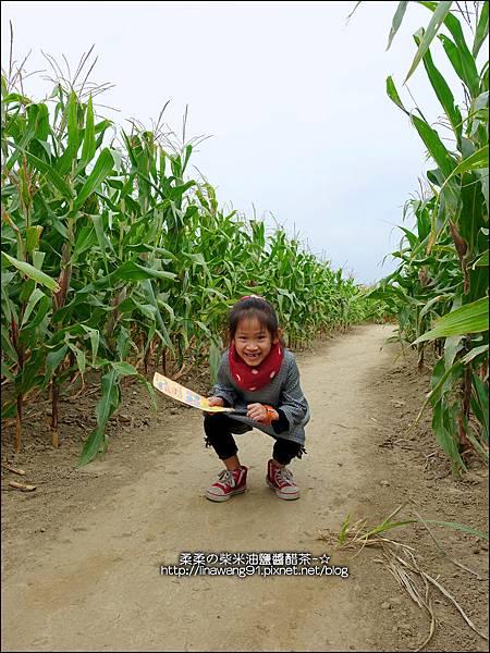 2014-1228-嘉義-義竹-玉米迷宮 (26).jpg