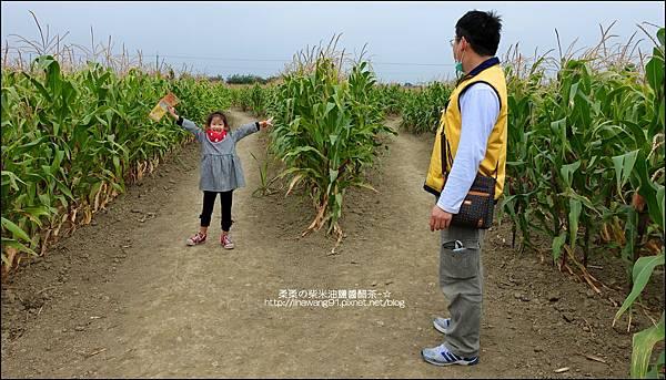 2014-1228-嘉義-義竹-玉米迷宮 (28).jpg