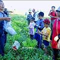 2014-1122-南埔芥菜節 (10)