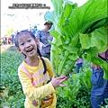 2014-1122-南埔芥菜節 (12)