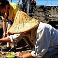 2014-1122-南埔芥菜節 (25)