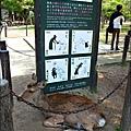 2014-0503-日本-大阪-奈良公園.jpg