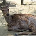 2014-0503-日本-大阪-奈良公園 (1).jpg