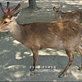2014-0503-日本-大阪-奈良公園 (2).jpg