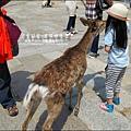 2014-0503-日本-大阪-奈良公園 (5).jpg