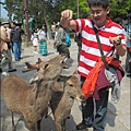 2014-0503-日本-大阪-奈良公園 (6).jpg