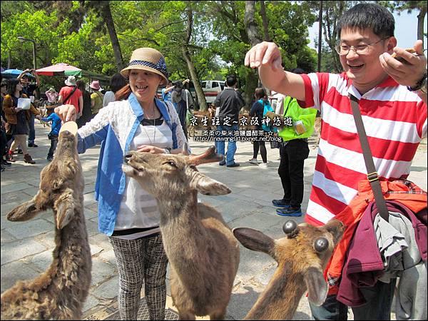 2014-0503-日本-大阪-奈良公園 (7).jpg