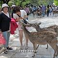 2014-0503-日本-大阪-奈良公園 (8).jpg