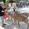 2014-0503-日本-大阪-奈良公園 (9).jpg