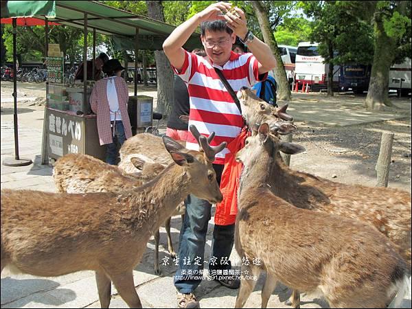 2014-0503-日本-大阪-奈良公園 (11).jpg