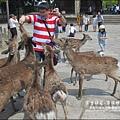 2014-0503-日本-大阪-奈良公園 (12).jpg