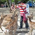 2014-0503-日本-大阪-奈良公園 (13).jpg