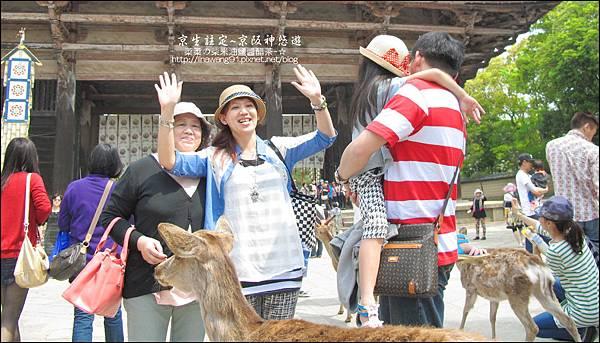 2014-0503-日本-大阪-奈良公園 (14).jpg