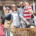 2014-0503-日本-大阪-奈良公園 (15).jpg