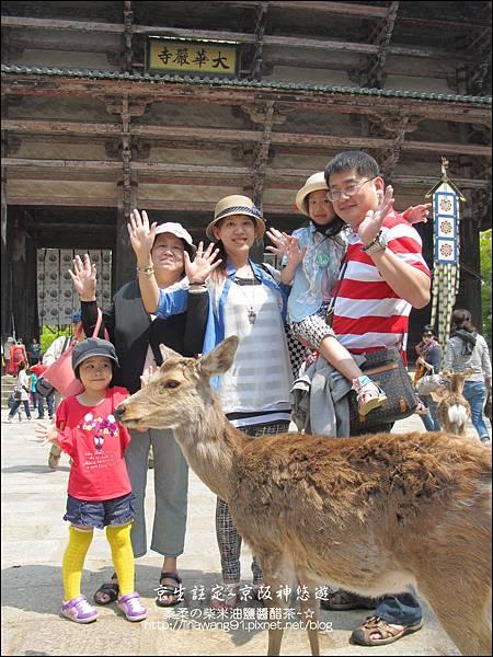 2014-0503-日本-大阪-奈良公園 (16).jpg