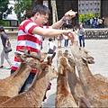 2014-0503-日本-大阪-奈良公園 (20).jpg