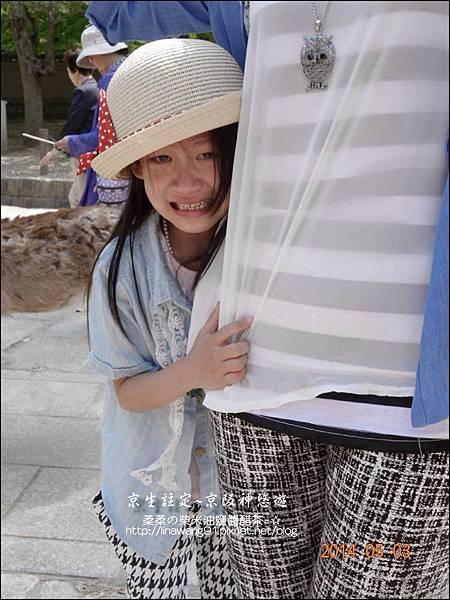 2014-0503-日本-大阪-奈良公園 (21).jpg
