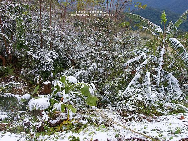 2016-0124-橫山-大山背雪景 (6).jpg