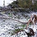 2016-0124-橫山-大山背雪景 (32).jpg