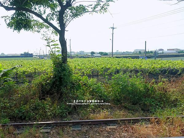 2015-0712-彰化-溪湖糖廠 (10).jpg