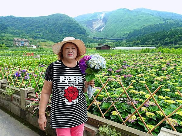 2017-0530-財福海芋田 (27).jpg