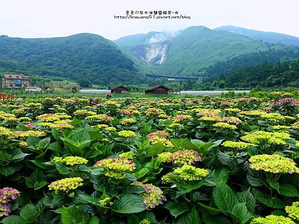 2017-0530-財福海芋田 (33).jpg