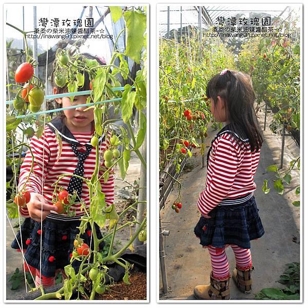 2011-0226-灣潭玫瑰草莓園 (62).jpg