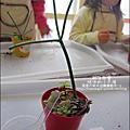 媽咪小太陽親子聚會-2011-0110-綠色-多肉植物 (15).jpg
