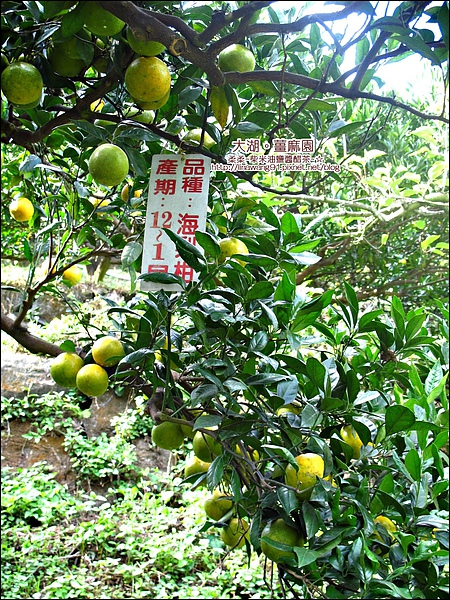 2010-1118  大湖-薑麻園-聖衡宮 (29).jpg