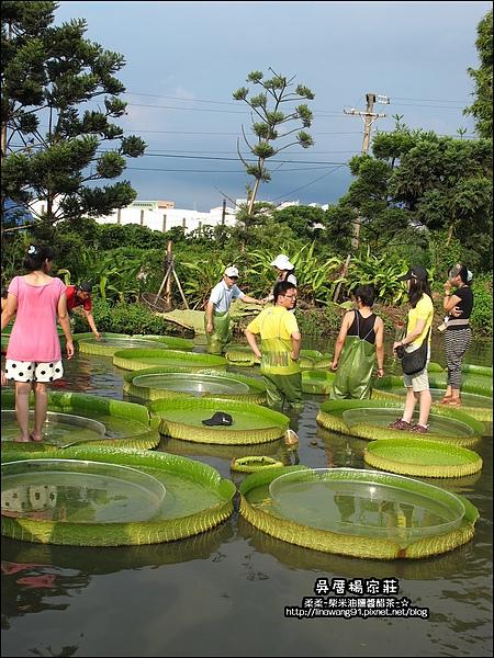 吳厝楊家莊-2010-0815 (27).jpg