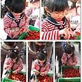 2011-0226-灣潭玫瑰草莓園 (63).jpg