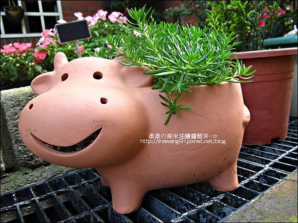 2011-0314-仙人掌組合盆栽 (14).jpg