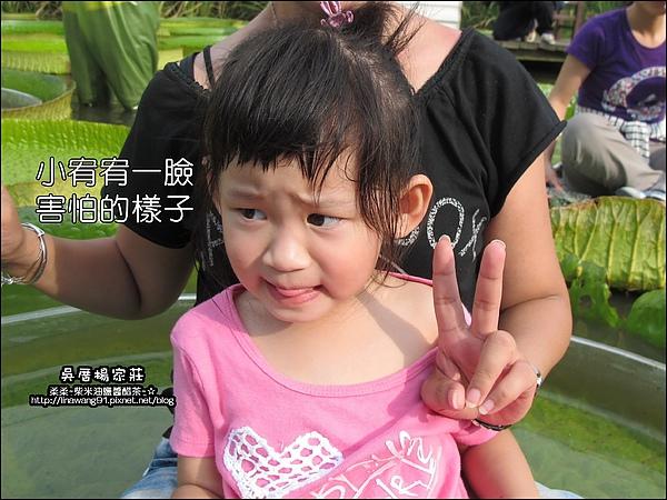吳厝楊家莊-2010-0815 (20).jpg
