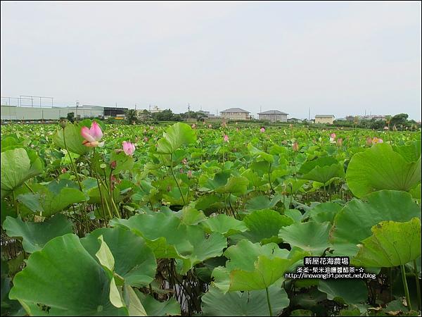 2010-0620-新屋花海農場 (23).jpg