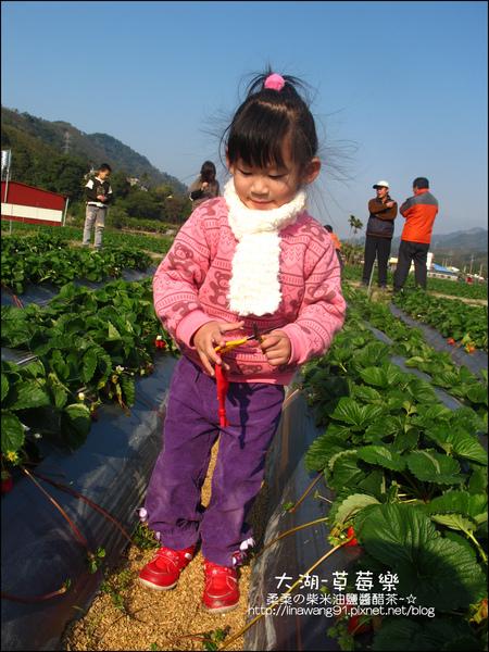 2011-0102-大湖採草莓 (24).jpg