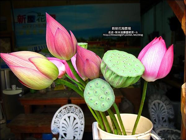 2010-0620-新屋花海農場 (20).jpg