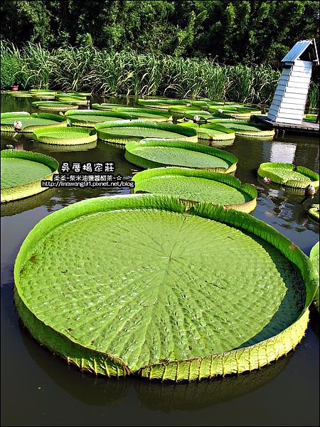 吳厝楊家莊-2010-0815 (1).jpg