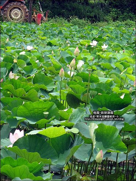 2010-0620-新屋蓮園 (28).jpg