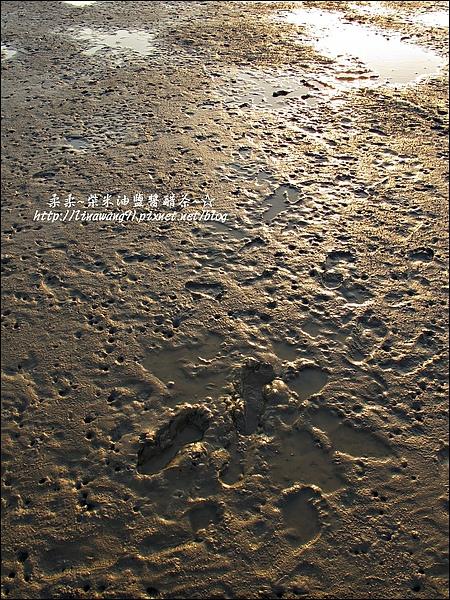 2010-0531-香山濕地-夕陽照 (7).jpg