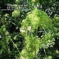 2010-0531-vilavilla山居印象農莊 (9).jpg